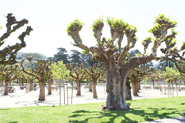 16_52 Golden Gate Park Trees