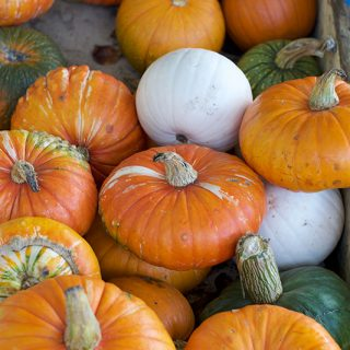 A Visit to Clancy's Pumpkin Patch